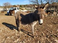 slika magarca s ebanovinom