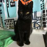 prekrasna uska teen maca crni brazilski analni seks