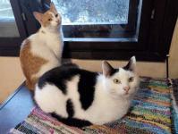 Besplatne slike djevojaka maca