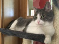 Slike mladih bucmastih maca