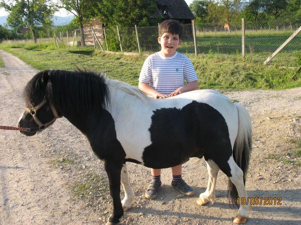 Poni konji