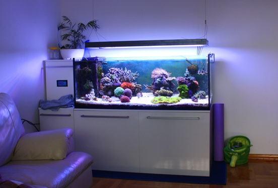 Akvarij : ELOS morski akvarij custom made, 133x60x50