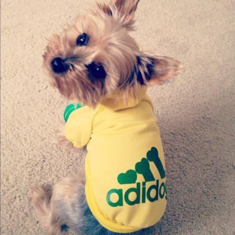 Odjeća za psa - Adidog hoodie