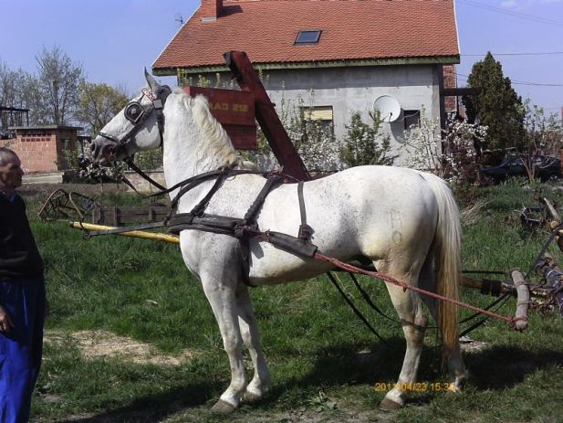 konji na prodaju oglasi http www njuskalo hr domace zivotinje konji