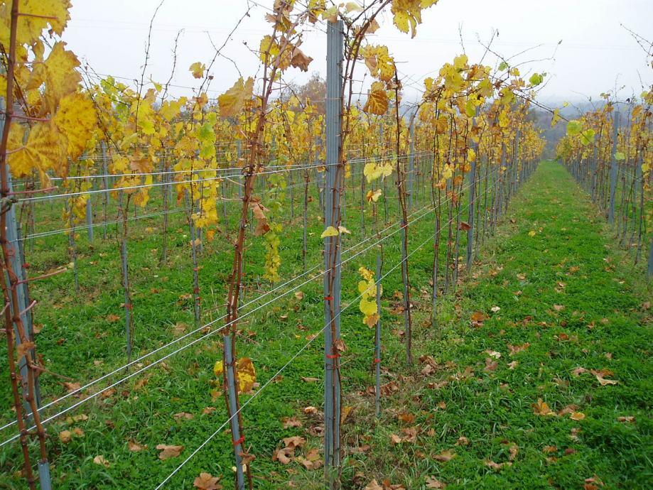 Stupovi za vinograde i voćnjake
