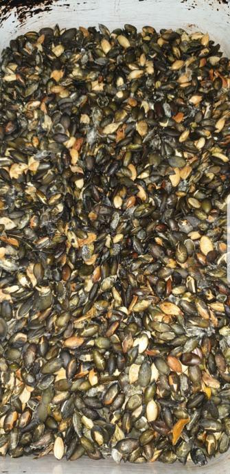 Bučine sjemenke pečene slane
