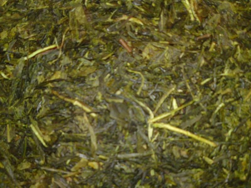 Sencha Japan (bio) 50 - zeleni čaj
