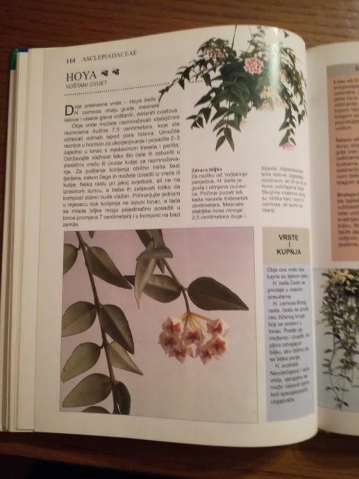 Knjiga Kućne biljke