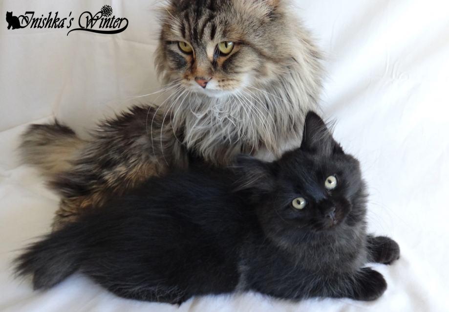 fotografije crna maca