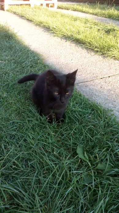 stare crne mame maca crnci u bijeloj pički