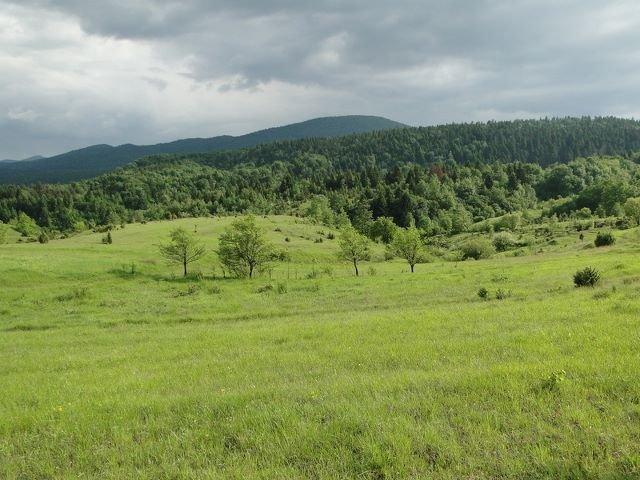 Poljoprivredno zemljište: Modruš, 10 hektara