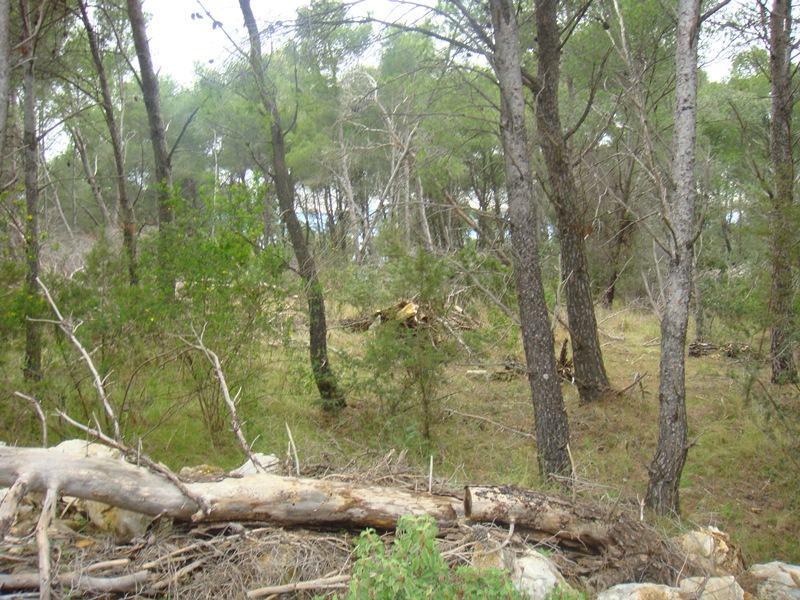 Poljoprivredno zemljište: Sutivan, 11853 m2