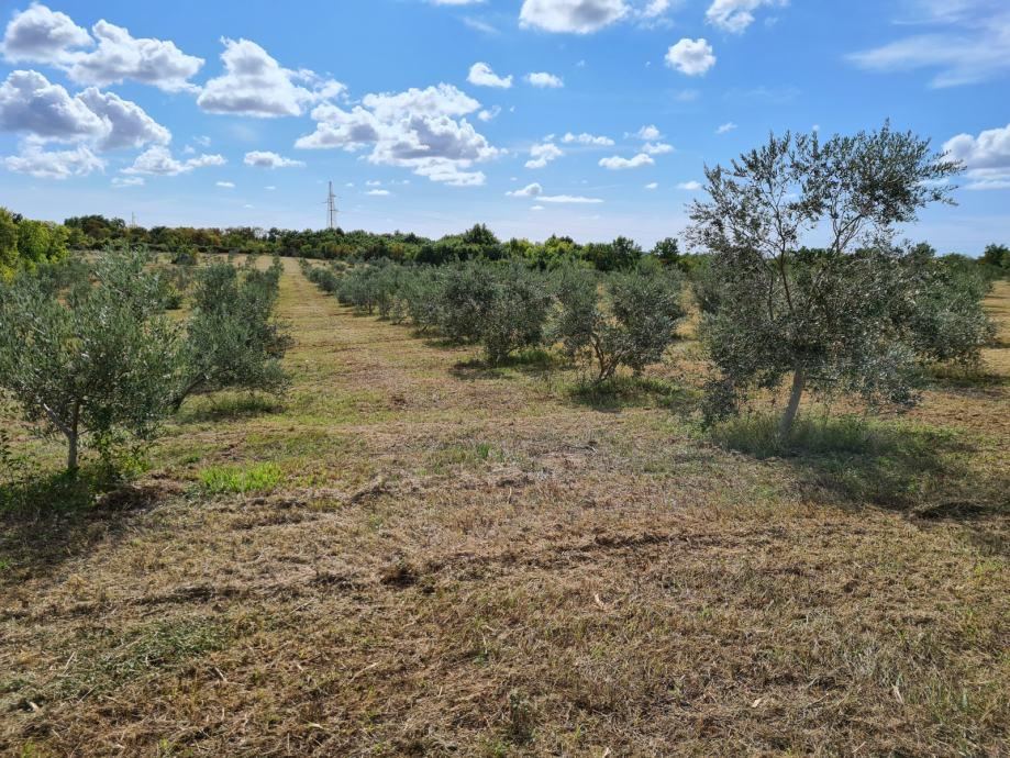 Poljoprivredno zemljište: Vodnjan, 45000 m2