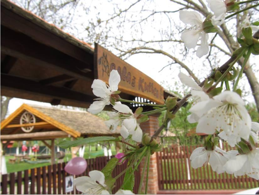 cherry blossom.com stranica za upoznavanja