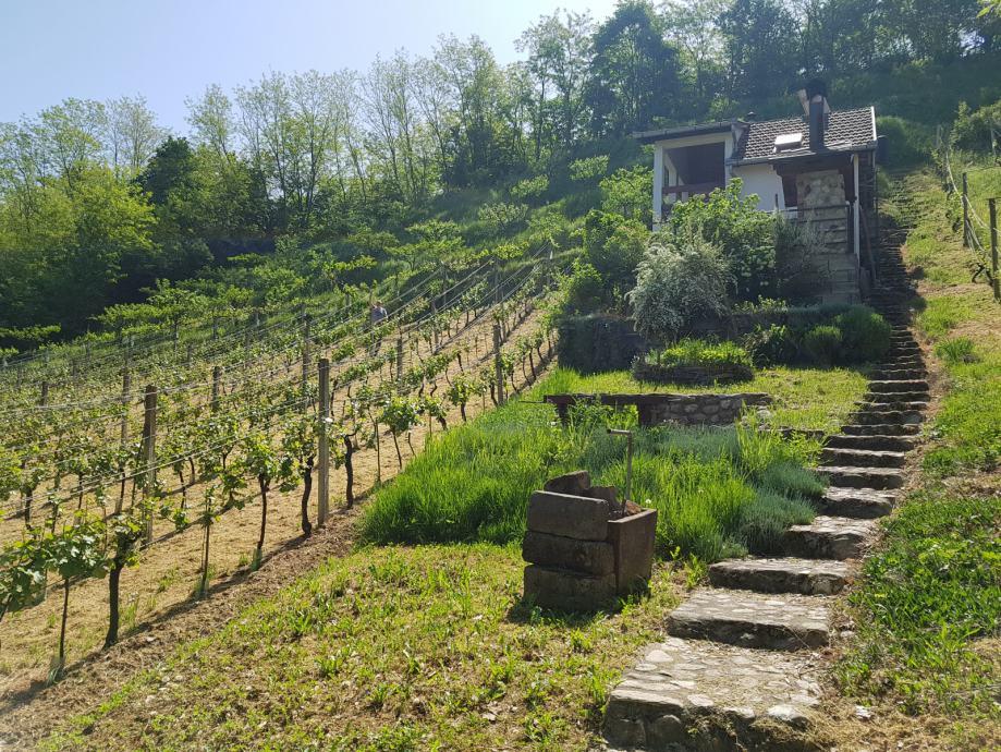 Prodaje se vikendica i velika okućnica s vinogradom i voćnjakom,Požega