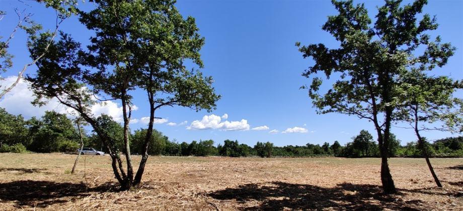 Velika vikend parcela Svetvinčenat 6.247m2 - Idealno za kamp kućicu
