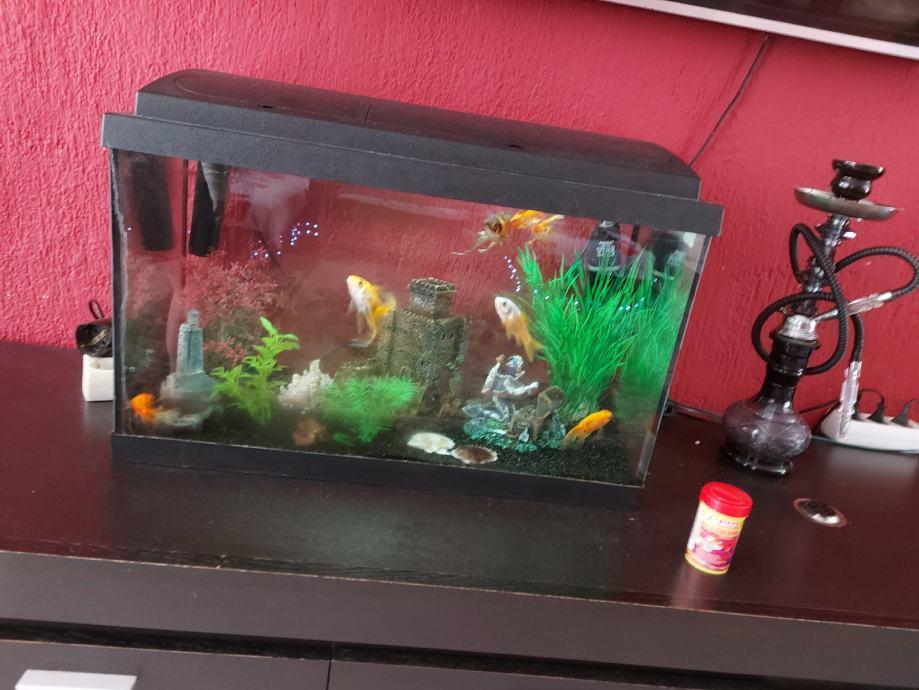 akvarij sa ribama