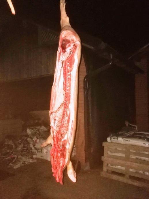 140- 240 kg bekoni obrada, rezervacije za 11mj 2019,Bjelovar