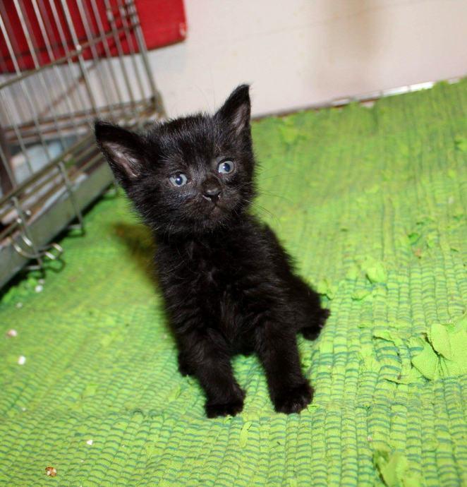 crna i zrela maca