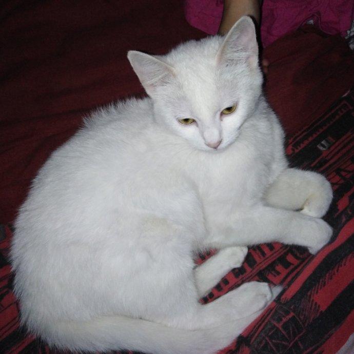 Slike s bijelim mačkama