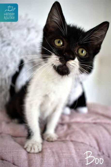 Stvarno mala uska maca