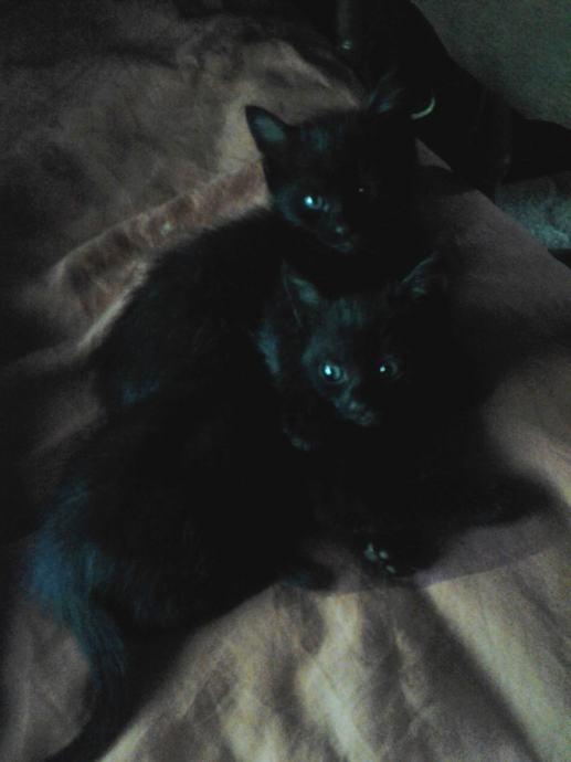 crne komadi maca