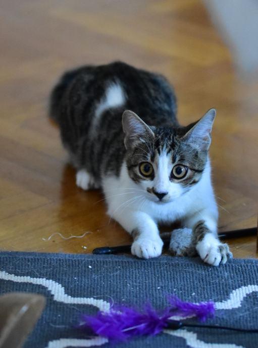 ebanovina maca skrivena slika