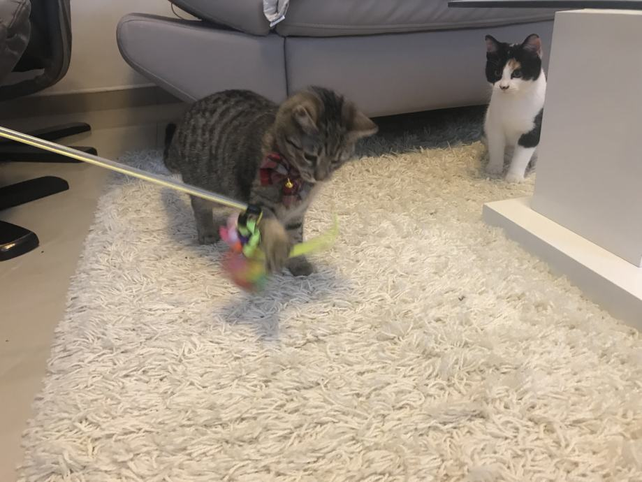 Uske slike maca