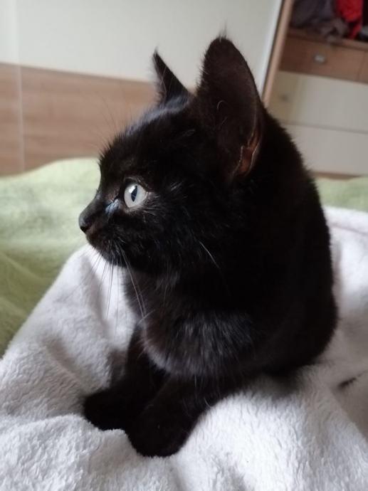 zašto je moja maca crna besplatne galerije crnih maca
