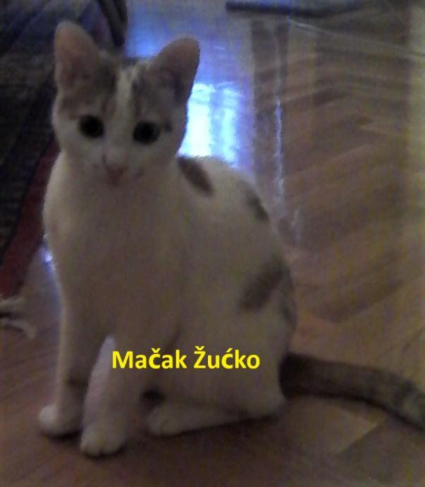 Mačak Žućko traži dom!