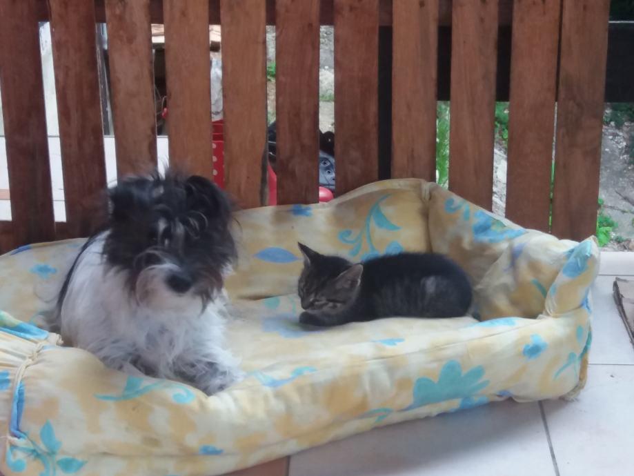 Mačići traže dom