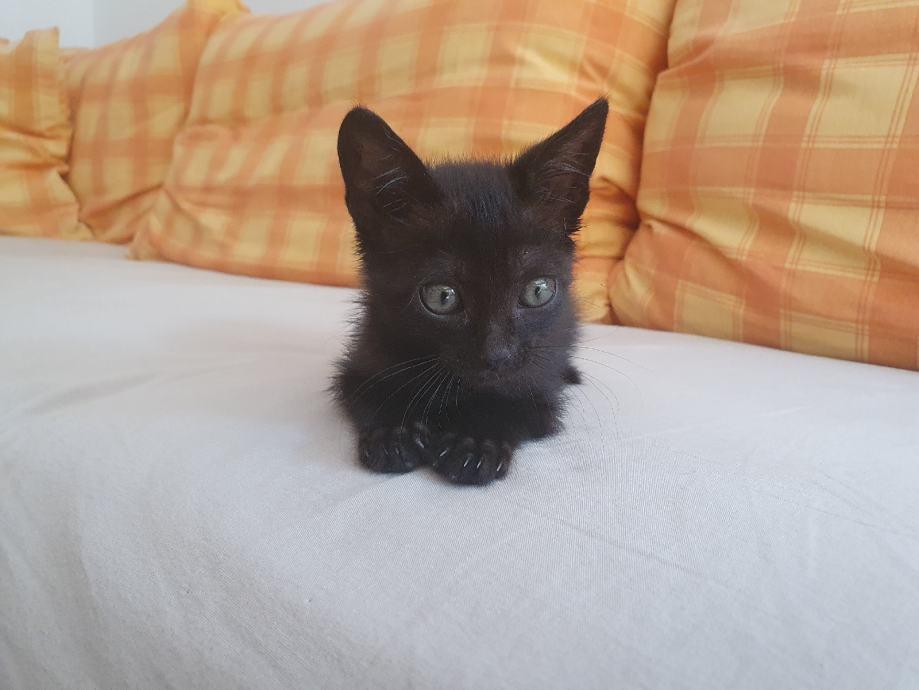 Mali crni mačić Mimo traži dom :)