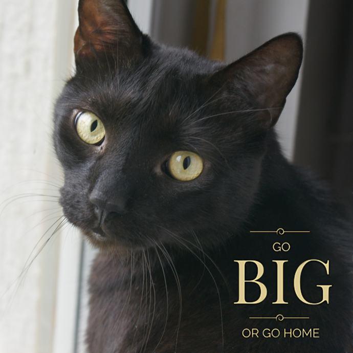 Ogromne crne slike maca