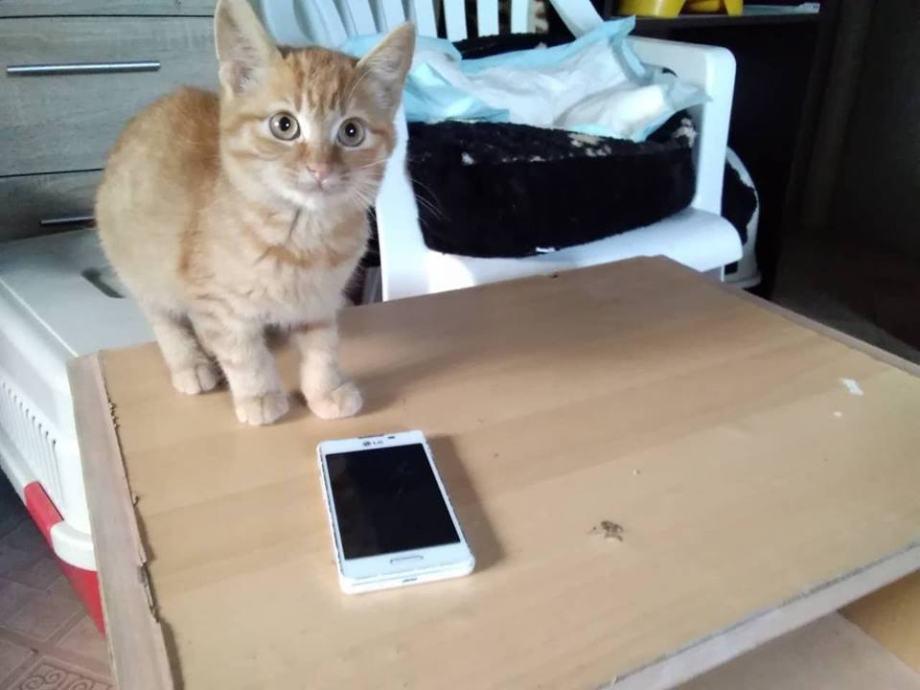 Slike zrele mačke besplatno