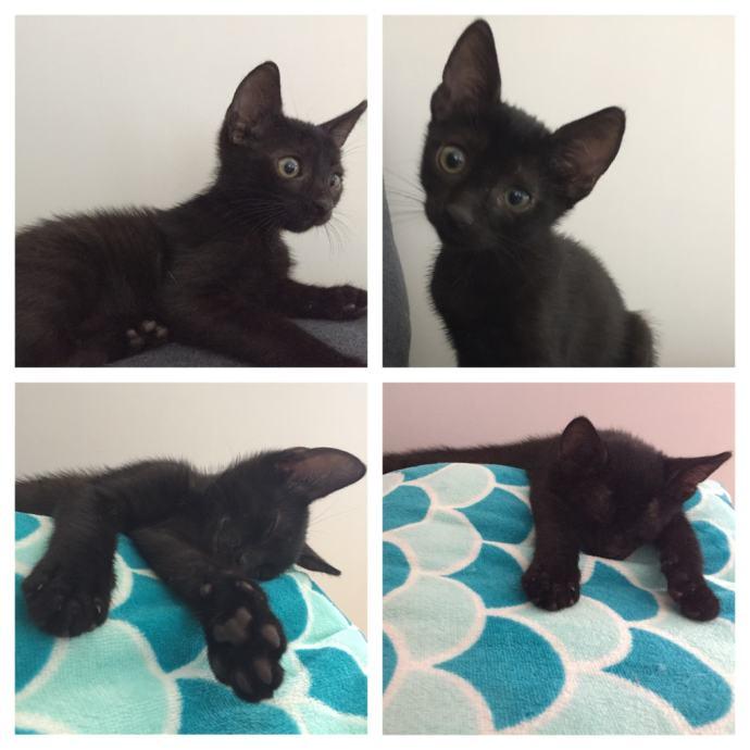 Samo velika crna maca