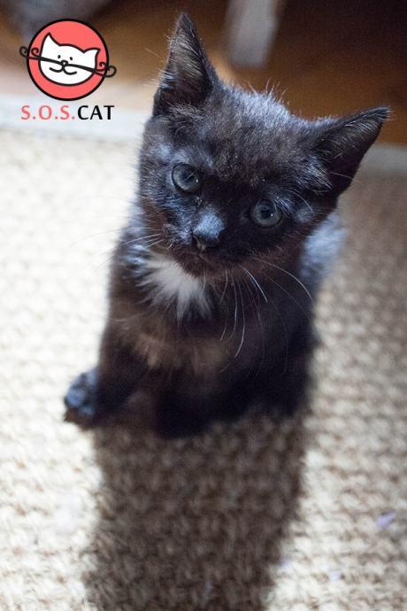 Crna bijela maca