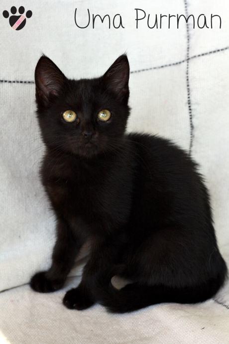 stara zrela crna maca gay sex mali penis