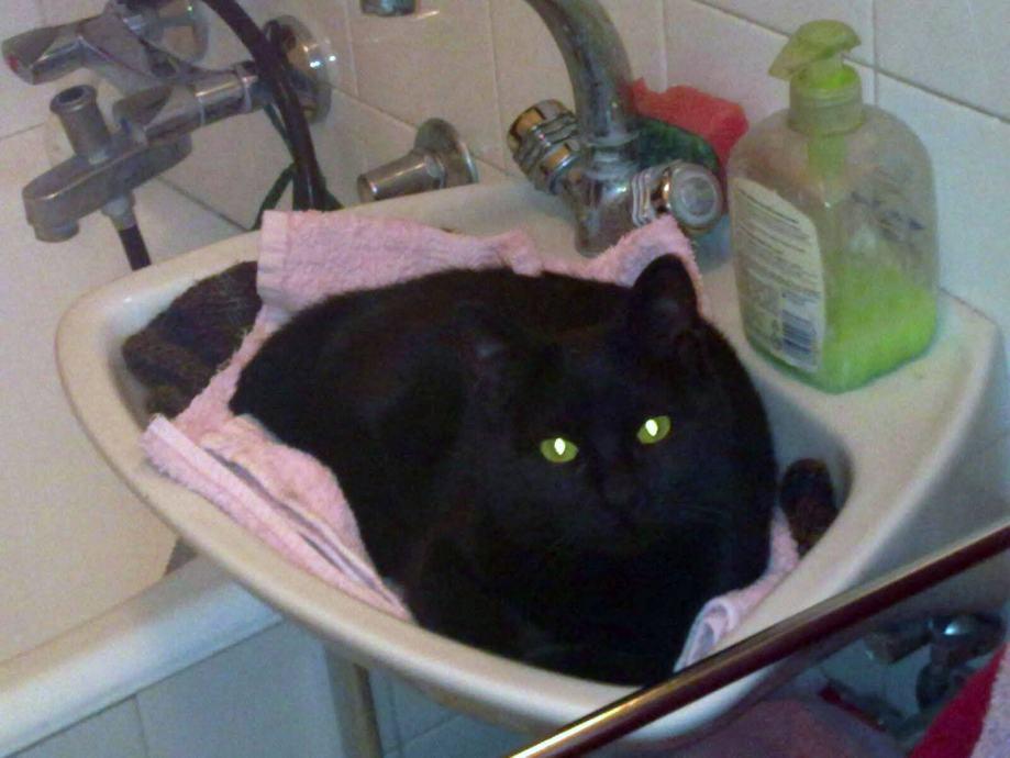 zelena crna maca starica se šuškala