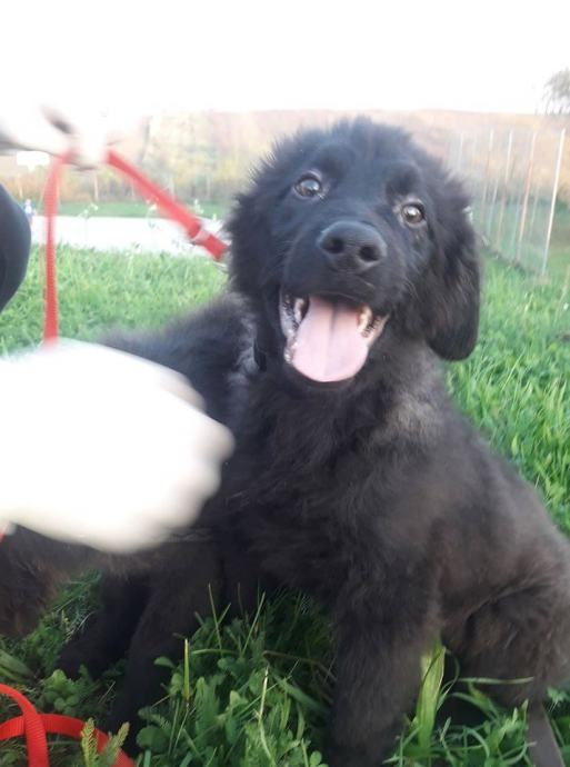 Moor, predivno štene od 5 mjeseci, traži dom