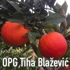 OPG Tiha Blažević